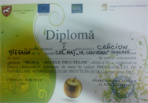 diploma Ștefana