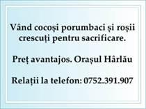 Cocosi Harlau