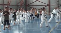 karate harlau