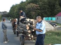 lemne politie harlau